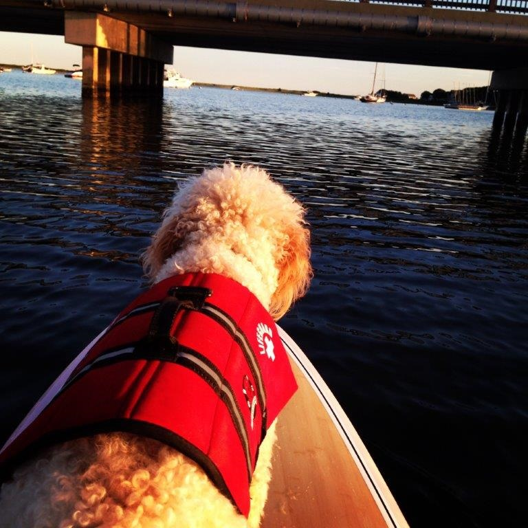 Tips To Avoid Boating Accidents and Injuries