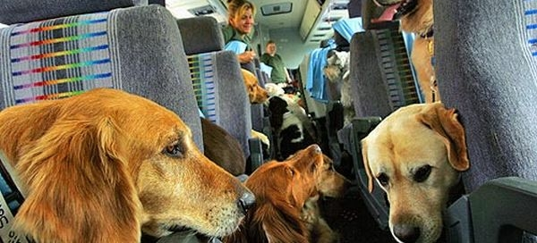 10 Tips For Flying With Pets!
